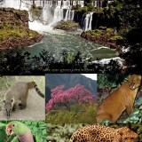 Iguazu_National_Park_Argentina