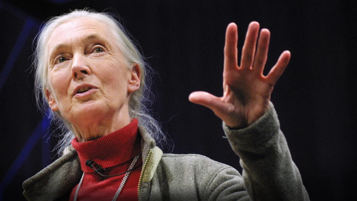 jane goodall s digging up the roots Jane faq's from jane goodall  jane goodall spends her time traveling all over the world, all year long,  and never give up what are jane's thoughts about bigfoot.