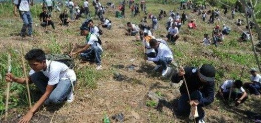 Speedy Tree Planting Record Broken In Philippines