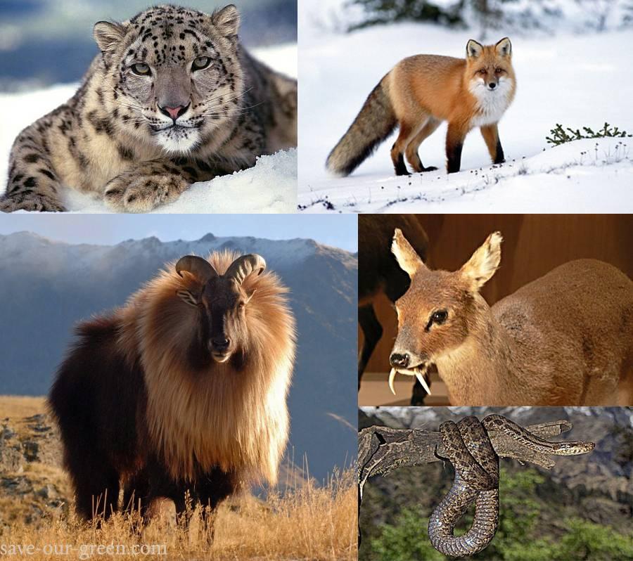 GHNP-animal