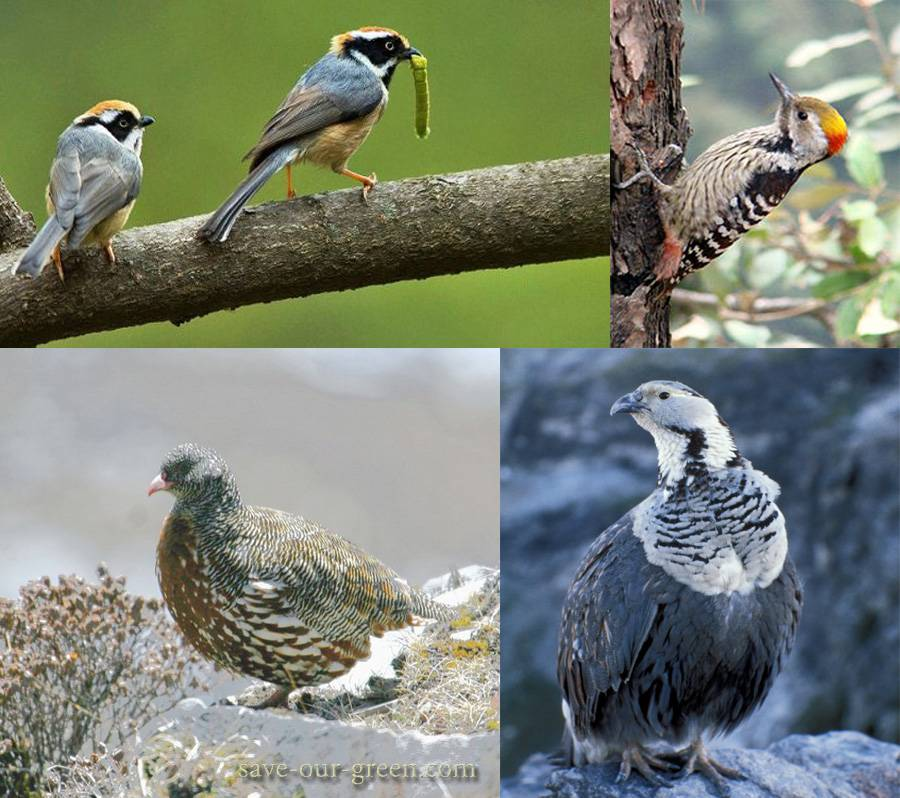 GHNP-bird