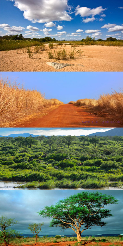 KrugerNPnatureview
