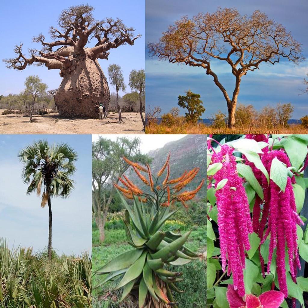 KrugerNPplants