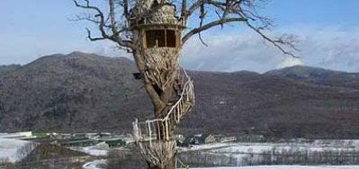 Nescafe Treehouse