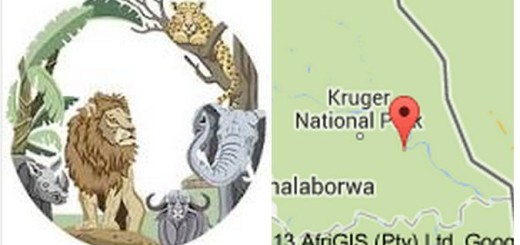 The Kruger National Park Graphics View