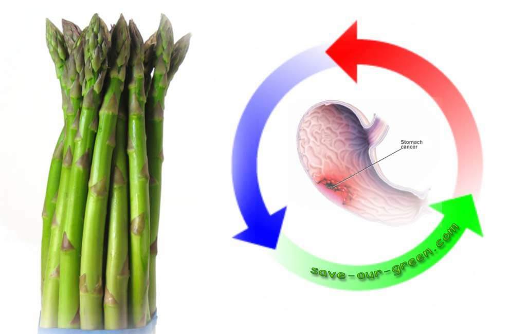 Greenasparagusstomachcancer