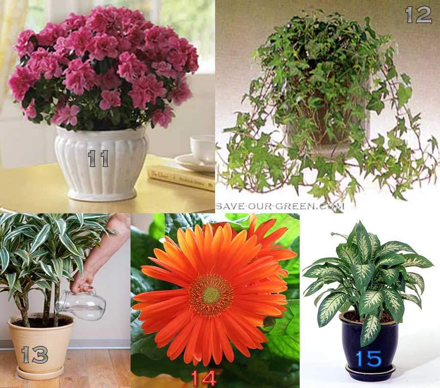 reducepollutionplants3