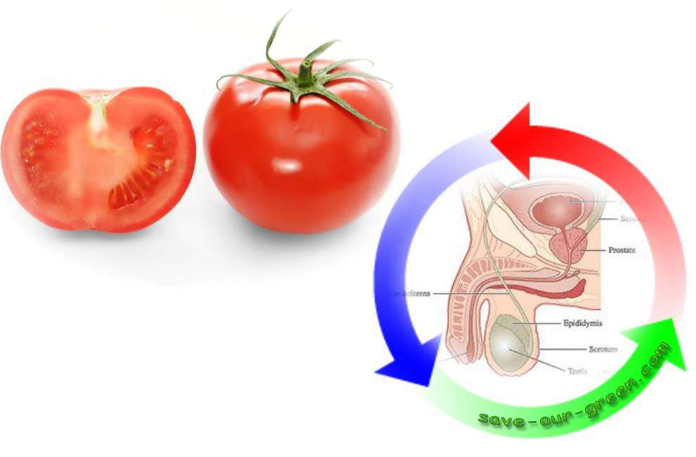 tomatoprostratecancer