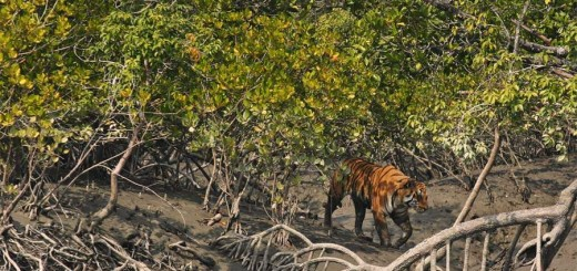 Beauty of Sundarbans