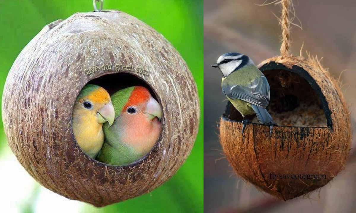 How to make a bird house - Coconut Bird House