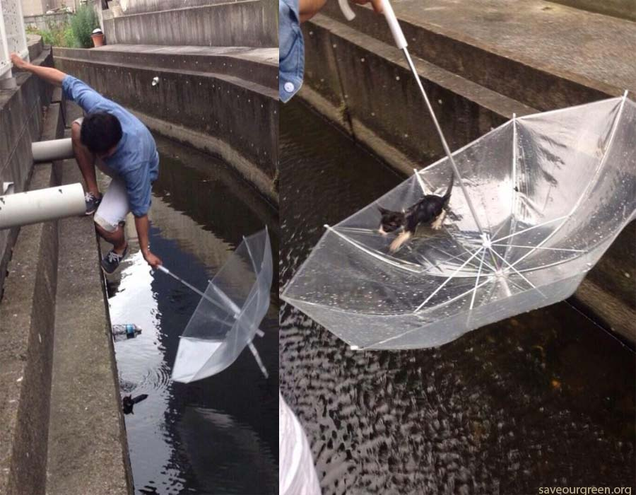Guy Saves Drowning Kitten With An Umbrella