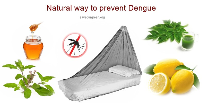 Natural way to prevent dengue fever