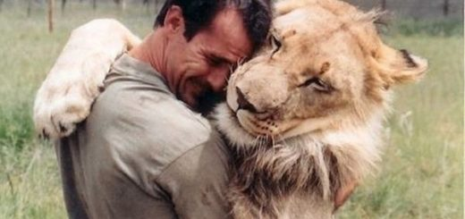 Meeting the World's Finest Lion Whisperer