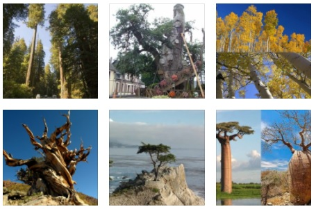 great trees in the world